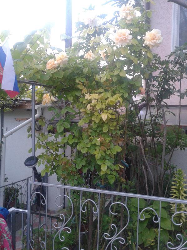 Гостиница гостевой дом в Севастополе